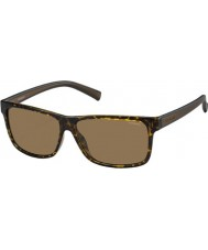 Polaroid Homens pld2027-S m31 ig Havana Brown óculos polarizados
