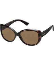 Polaroid óculos de sol Senhoras pld4031-s q3v ig escuro havana polarizados