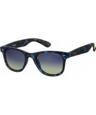 Polaroid sec Pld6009-nm Z7 Havana Blue óculos polarizados
