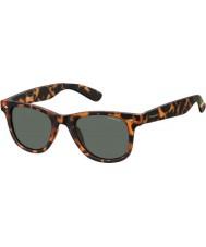 Polaroid Pld6009-ns sog rc havana laranja óculos polarizados